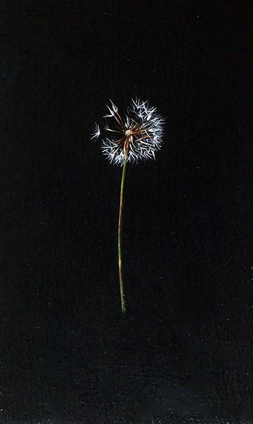 cassidy dandelion